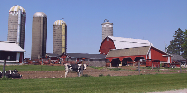 Dairy Farmers Reacting To Market Uncertainty